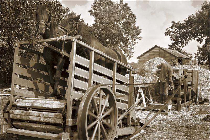 <font size=+2>Mechanized Thrashing</font>  Oliver H. Kelley Farm Minnesota Historical Society Elk River, Minnesota <font size=-2>(3-22315)</font>