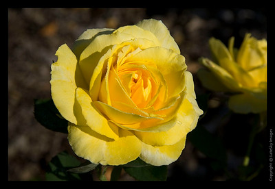 091 Mellow Yellow