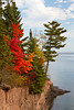 A red maple tree exhibiting fall color on the north shore of Lake Superior, Minnesota, USA.