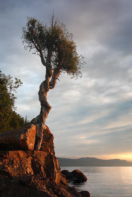 Relentless - The Little Spirit Tree (Grand Portage, MN)
