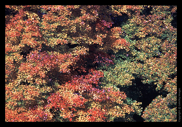 L08 Fall Colors