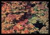 L08 Fall Colors