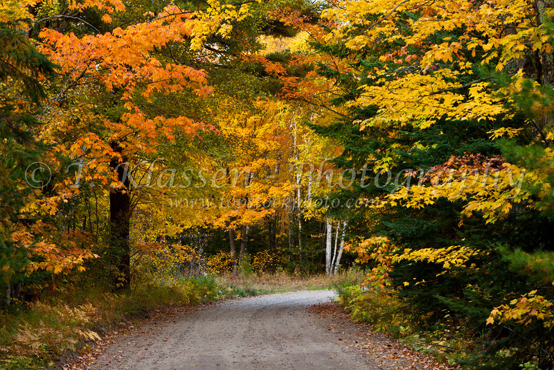 Fall foliage color in the forests near Grand Rapids, Minnesota, USA.