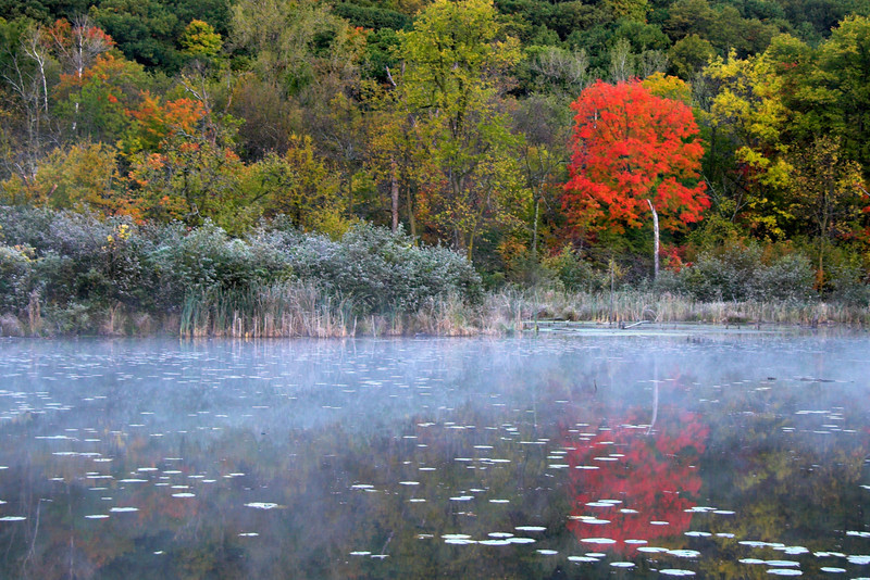 Fall along the St. Croix<br /> <br /> Stillwater, Minnesota<br /> (3-00049)