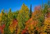 Fall foliage color in the trees along Highway 11 near Brimson, Minnesota, USA.