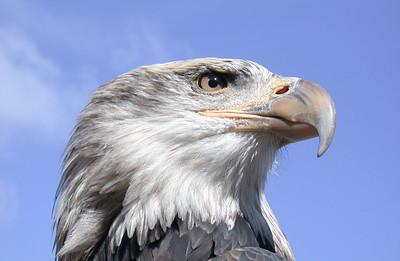 EagleBlue
