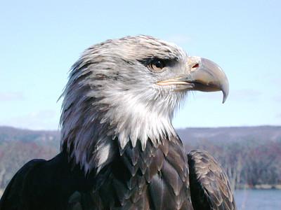 EagleBlue2