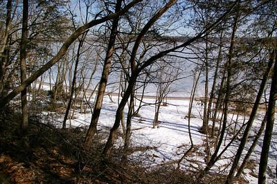 BeachTrees2
