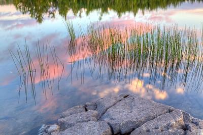 Ensing Grass Reflections