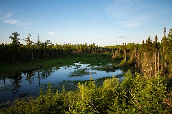 Minnesota Bog
