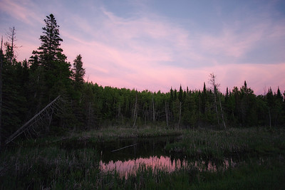 Sunset in the Boreal Forest