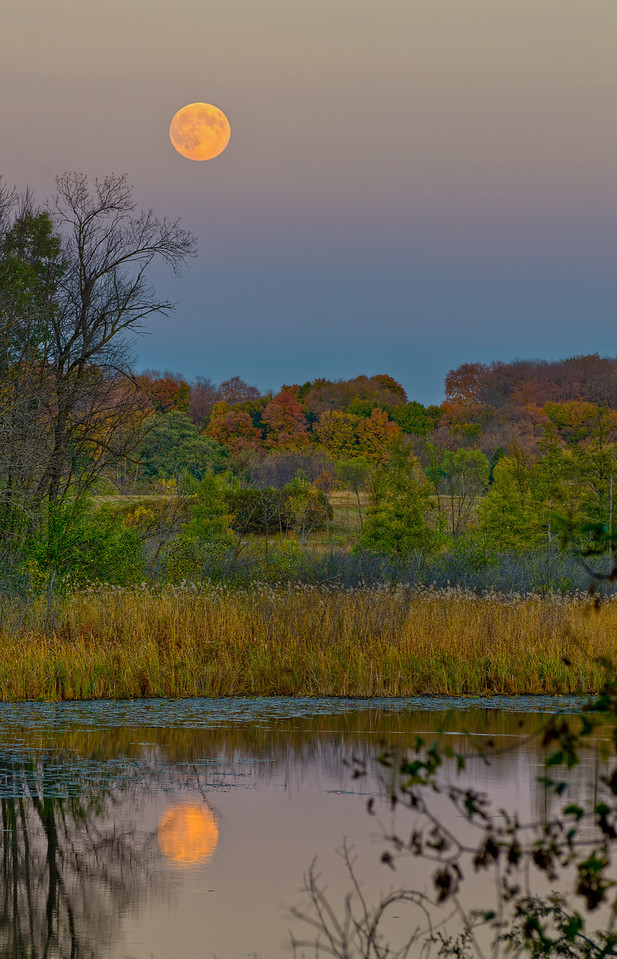 A Hunters Full Moon is reflected in the Wood Duck Pond---Arb-5060