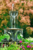 Annual Garden fountain and Smoke Bush on a windy summer day---Arb-2002