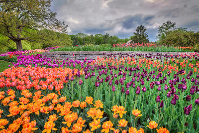 The 2013 Arboretum Tulip Collection.