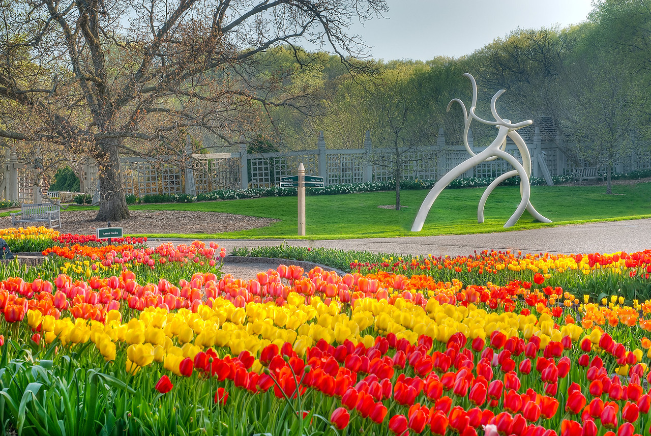 32,000 tulips and Steelroots. The 2011 Arboretum Collection---Arb-2036