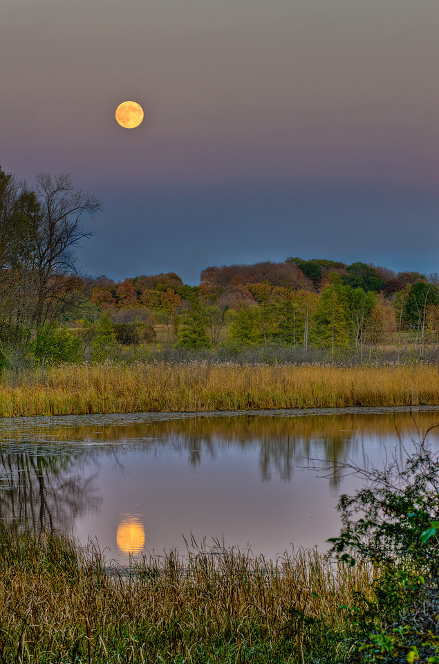 A Hunters Full Moon is reflected in the Wood Duck Pond---Arb-5061