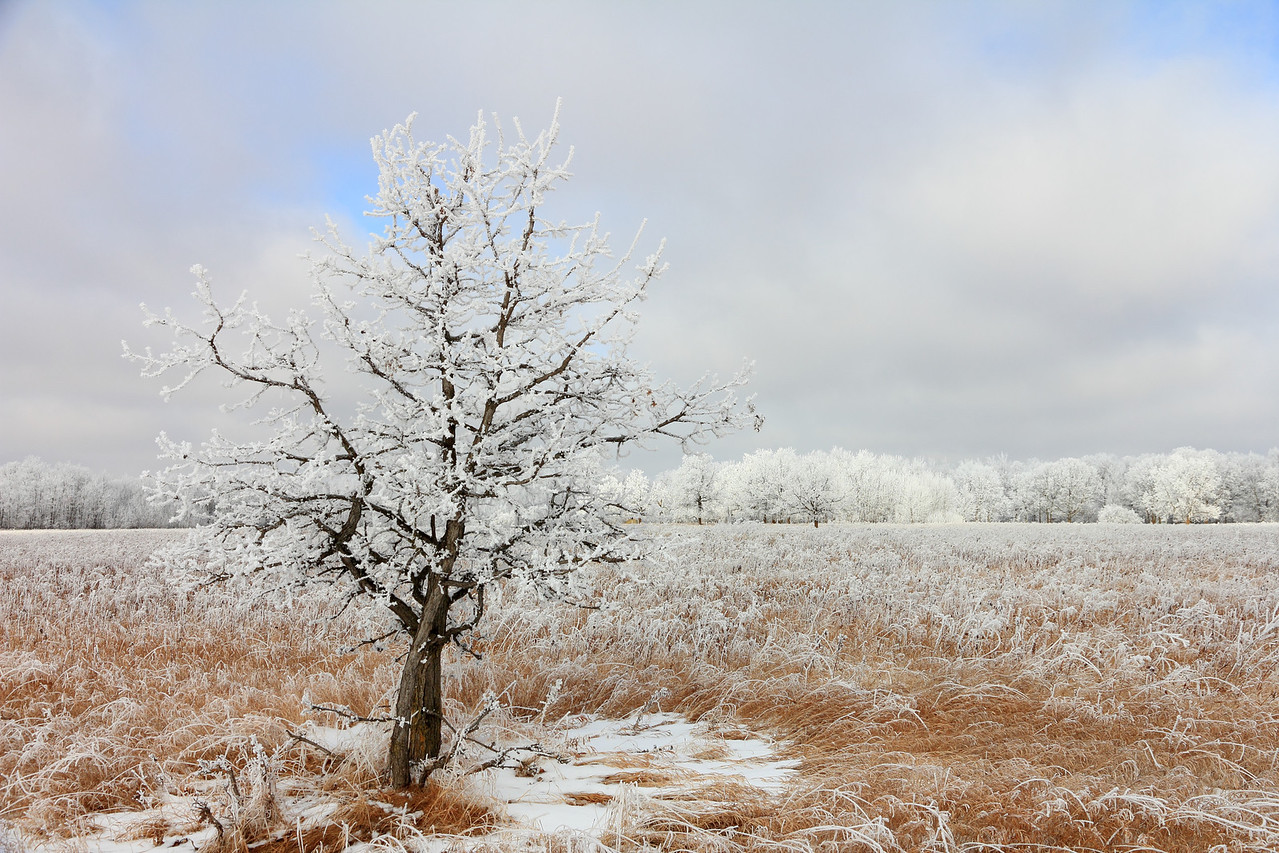 Winter scene in NW Minnesota after a couple days of dense fog