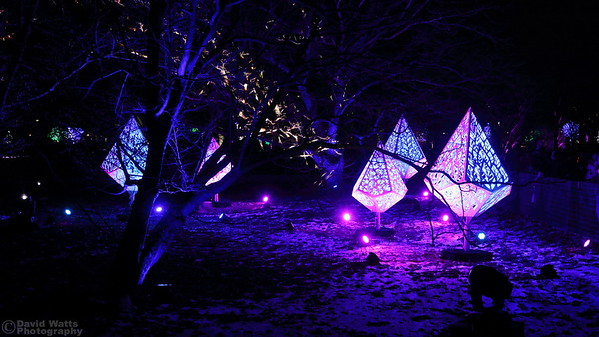 Spaceships - Morton Arboretum Illumination 2019