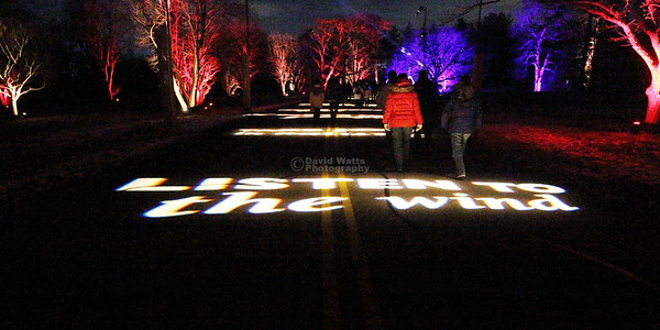 Listen to the Wind - Morton Arboretum Illumination 2019