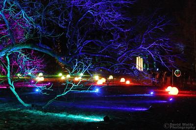 Orb Grove - Morton Arboretum Illumination 2019