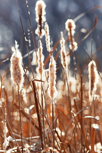 Reeds at Moraine Hills State Park