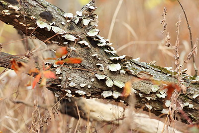 Fungus at Moraine Hills State Park