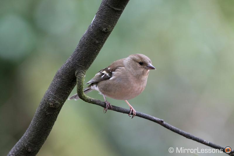 sony a6300 bird photography