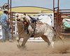 LI4_3369_MoosominBull_Futurity2017