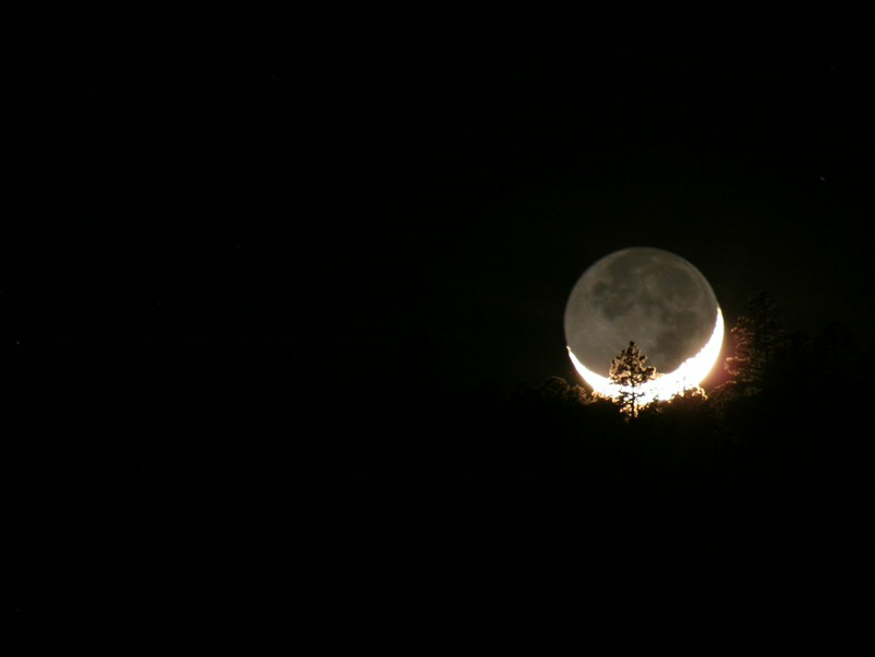 Moonset behind the trees (Mayhill, NM)