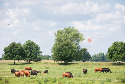 masterrind-beef-cattle-herd_20140702_0032
