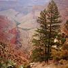 Canyon Trees