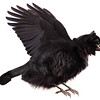 The Zephyr Bird