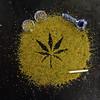 Rochester's Drug Scene