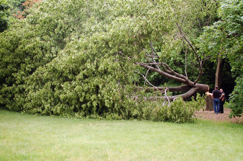 Tree Vandalism