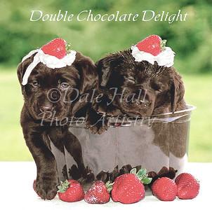 Double Chocolate Delight