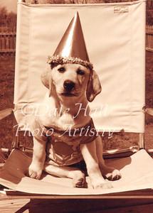 Birthday Pup copy