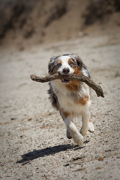 April 8th, 2012 ~ I never knew Izzy loved sticks so much!