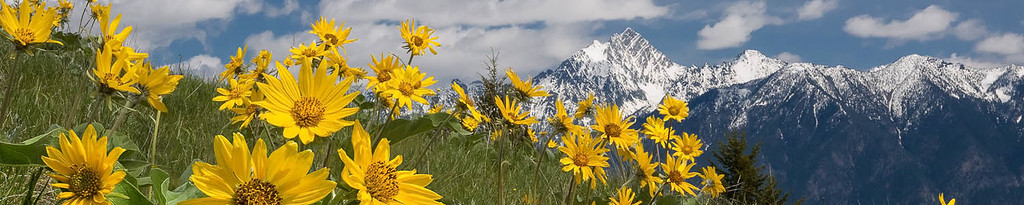 Fisher-Peak with Balsamroots-2014-6040-6028-