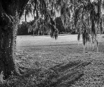 Charleston_032019-8