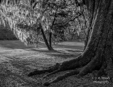 Charleston_032019-5