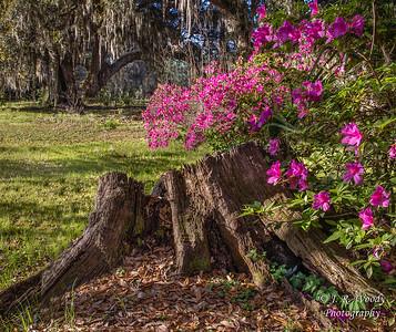Charleston_032019-9