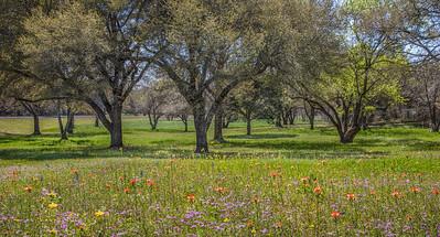 Texas Image-37