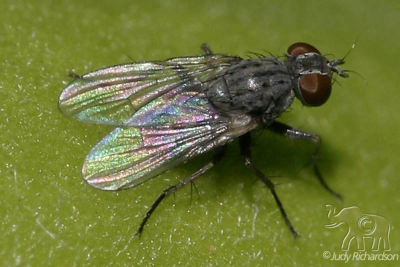 Beauty of flies