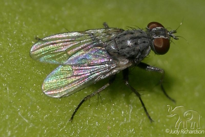 Beauty of flies
