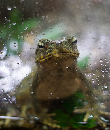A Frog Day(