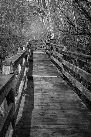 Boardwalk To The Light