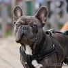 "Good dog. <br><span class=""skyfilename"" style=""font-size:14px"">2018-09-30_skydive_cpi_0372</span>"