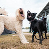 """Vicious dogs. <br><span class=""""skyfilename"""" style=""""font-size:14px"""">2018-10-06_skydive_cpi_0679</span>"""