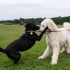 """Bixby and Luna. <br><span class=""""skyfilename"""" style=""""font-size:14px"""">2018-10-06_skydive_cpi_0489</span>"""
