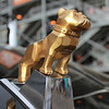 Mack Bulldog gold